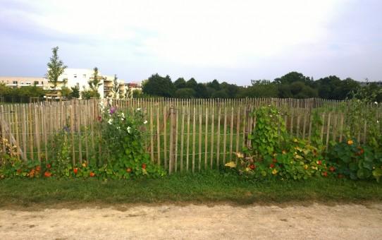 A propos du collectif du jardin partagé de Beauregard